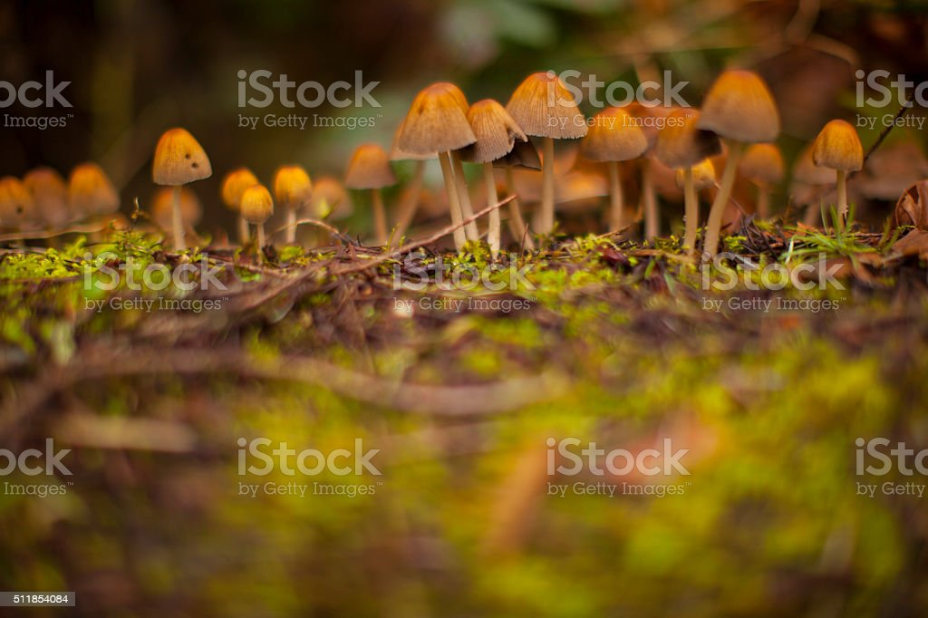 Mushrooms on a branch stock photo