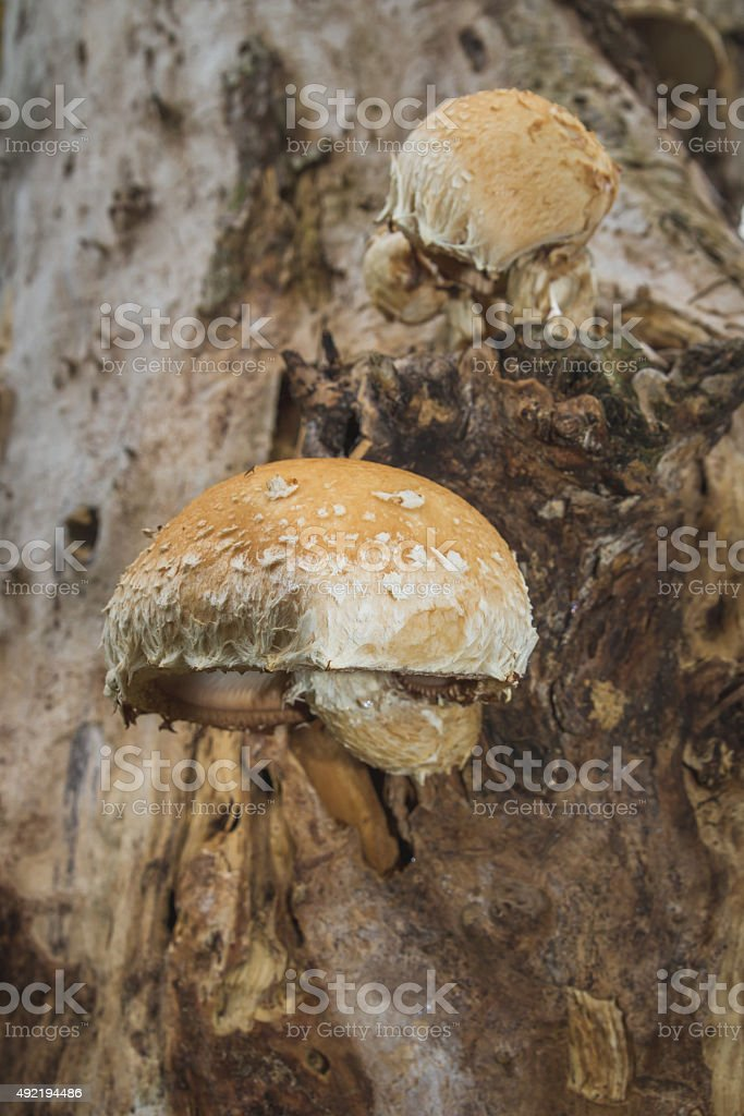 Mushrooms on a Log stock photo
