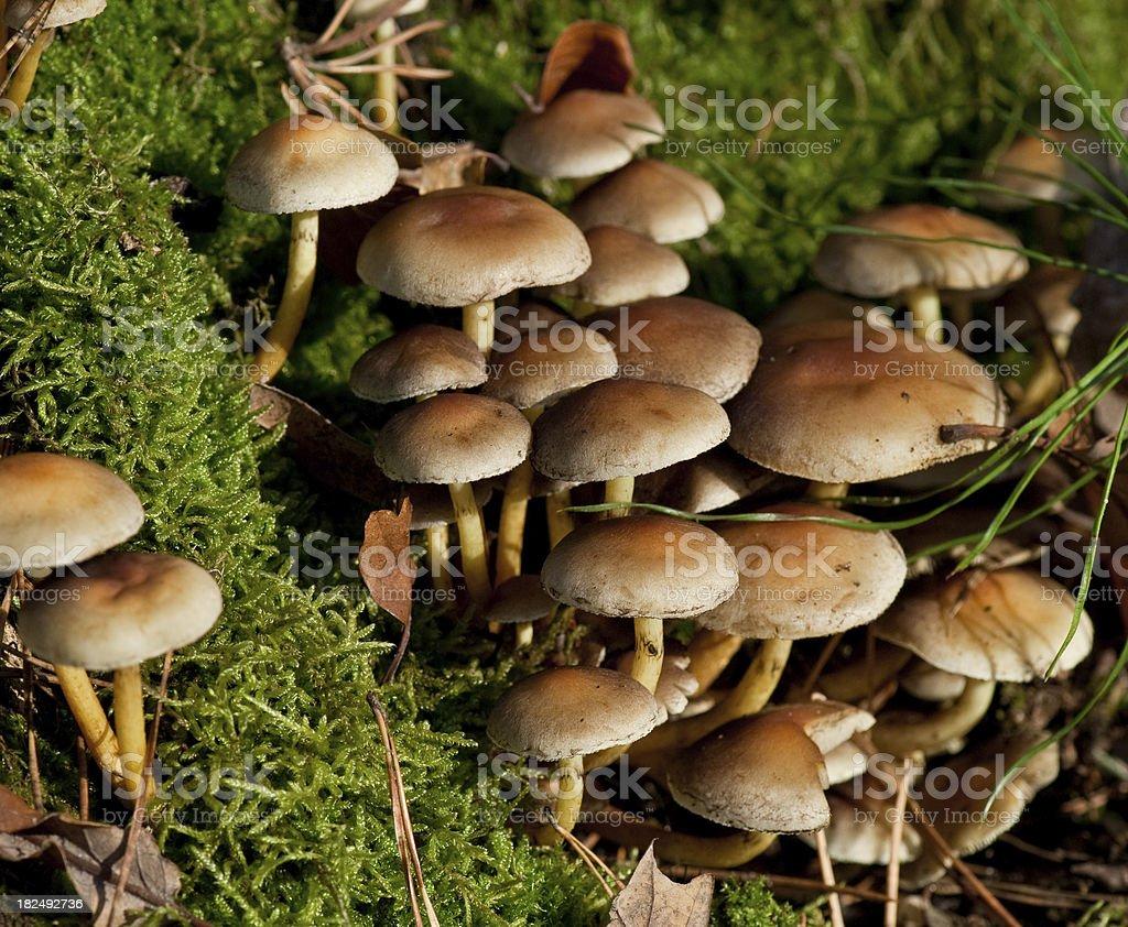 Mushrooms on a Mossy Log stock photo