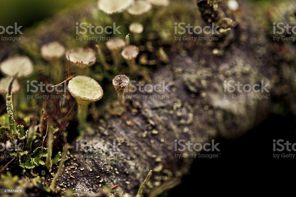 Mushrooms on a tree royalty-free stock photo