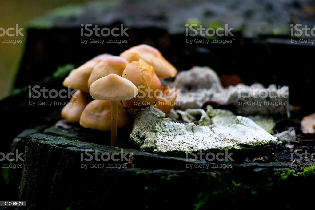 Mushrooms on the stub stock photo