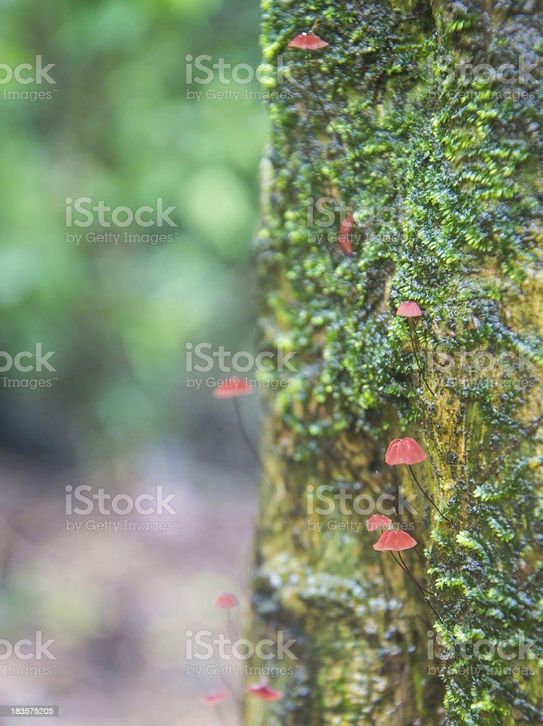 mushrooms on tree royalty-free stock photo