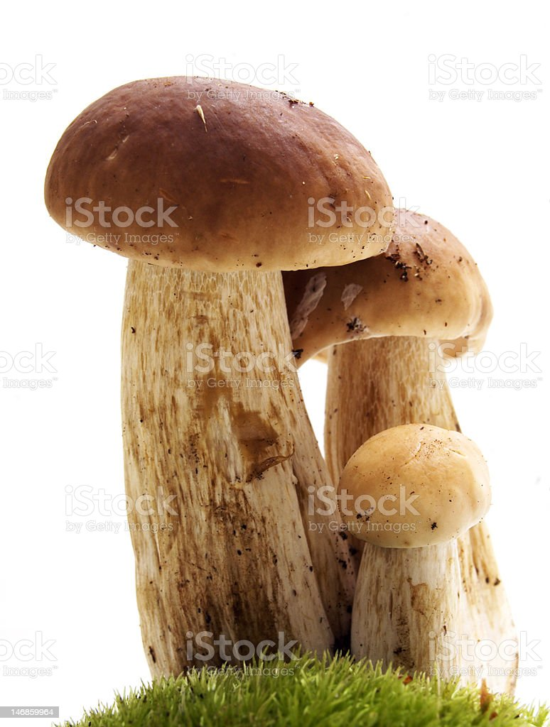 Mushrooms on white - ceps royalty-free stock photo