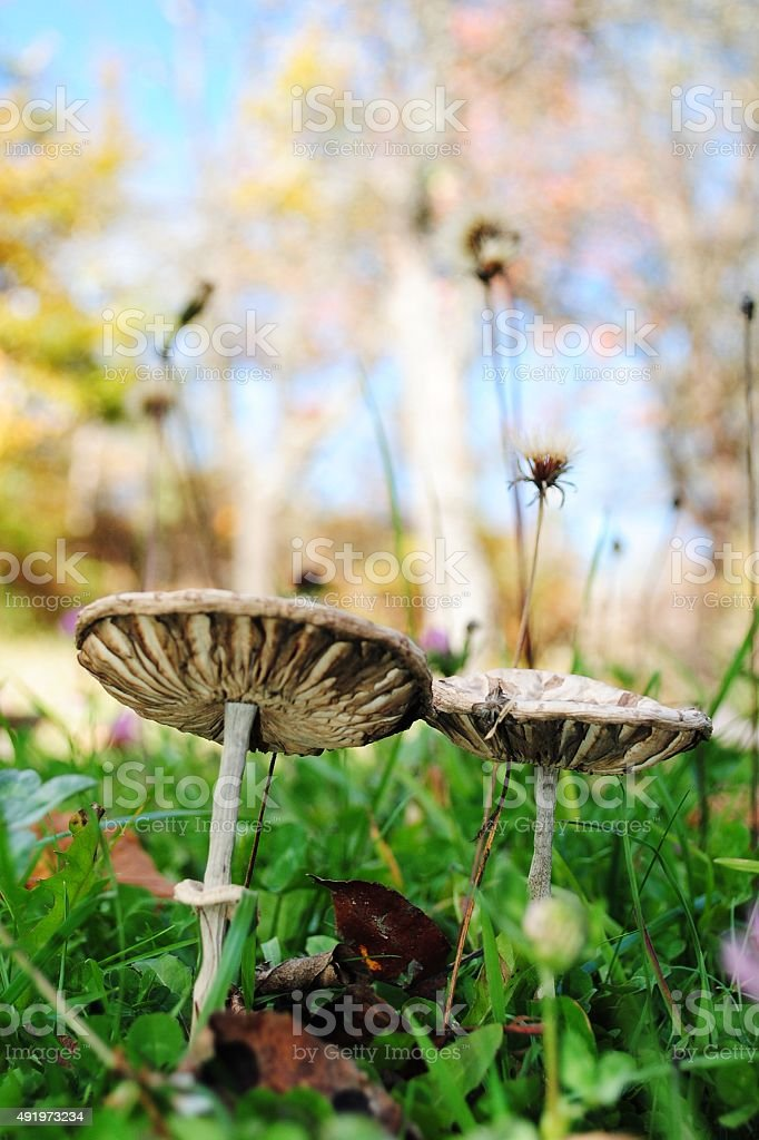 Funghi foto stock royalty-free