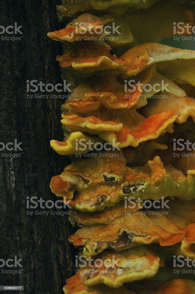 Cogumelos foto de stock royalty-free
