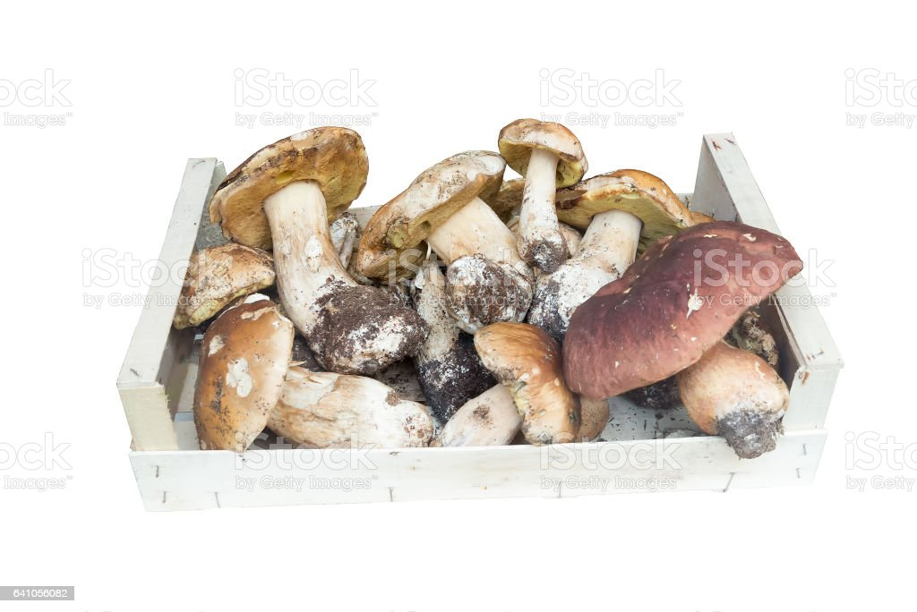 Mushrooms porcini in a basket on a white background stock photo