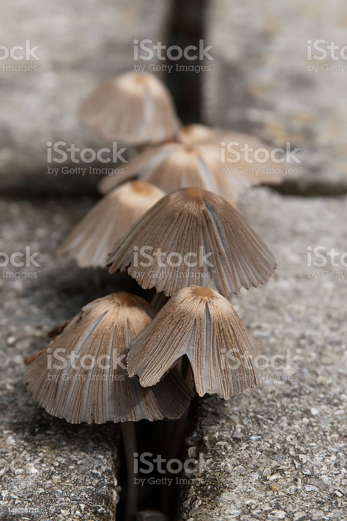 mushrooms showing vitality stock photo
