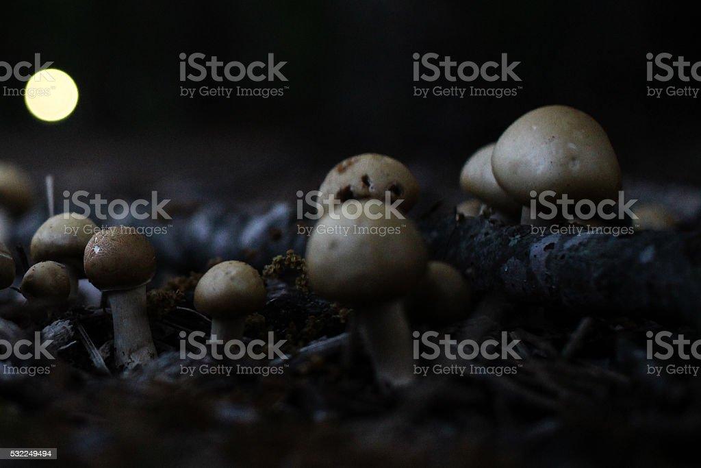 Mushrooms & Will O' The Wisp stock photo