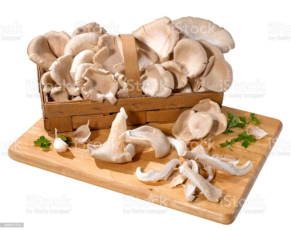 Mushrooms:oyster mushroom stock photo