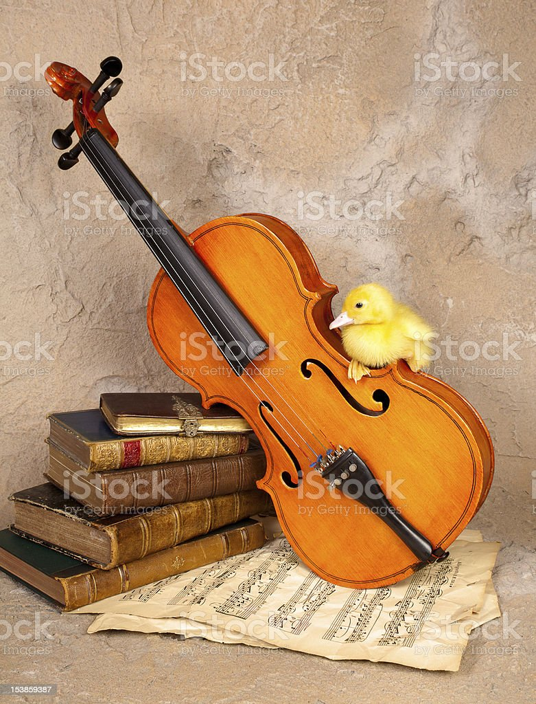 Music loving duckling royalty-free stock photo