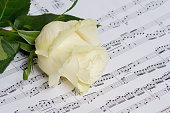 music sheet, white rose