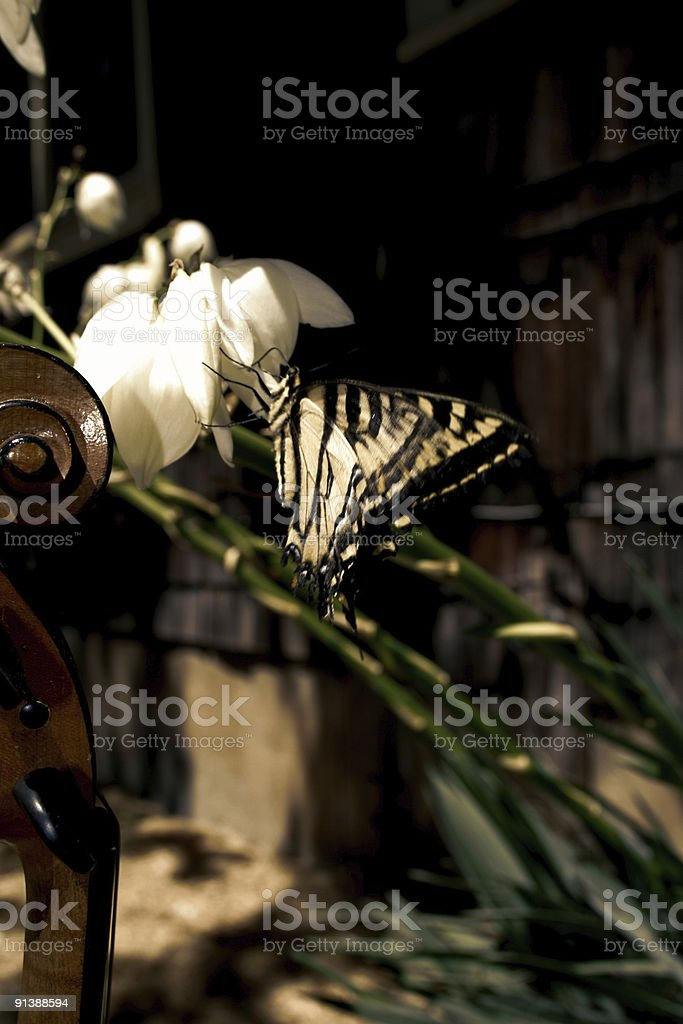 Musical Fly stock photo