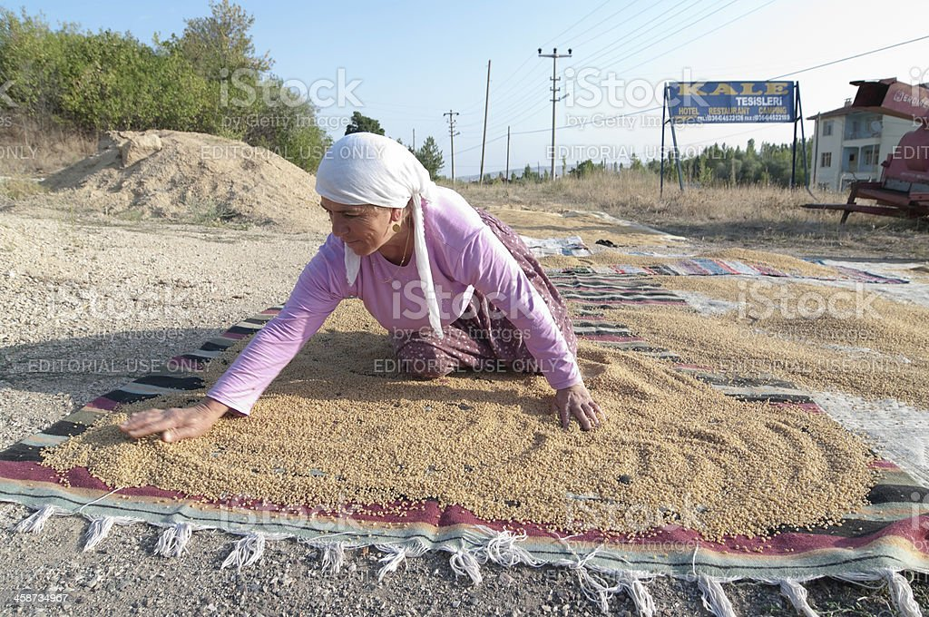 Muslim Woman Is Working To Dry Seeds Cereal stock photo