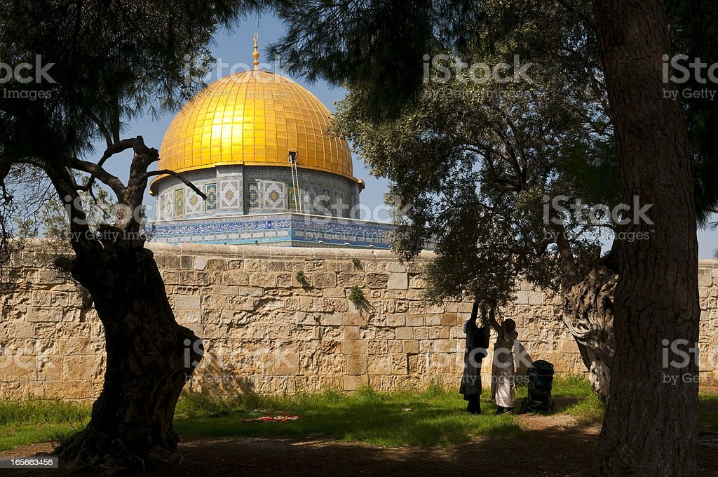 Muslim women picking olives beside Dome of the Rock stock photo