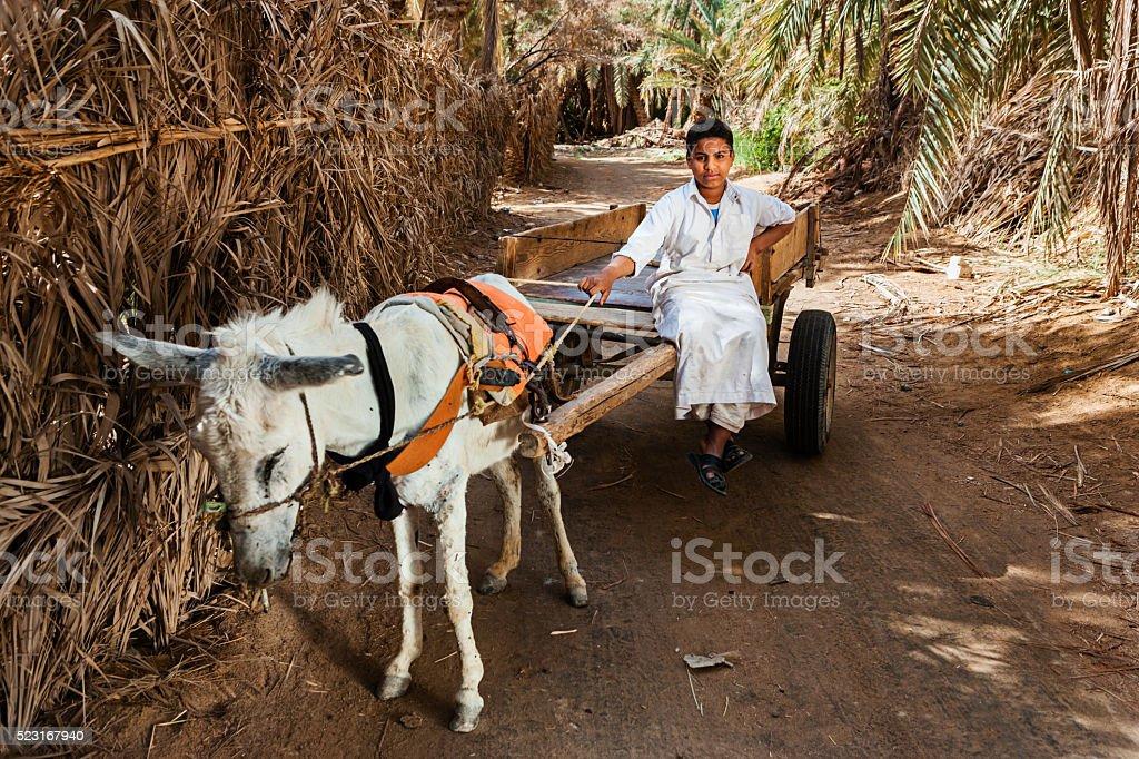 Muslim young boy riding on donkey cart, Siwa Oasis, Sahara stock photo