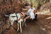Muslim young boy riding on donkey cart, Siwa Oasis, Sahara