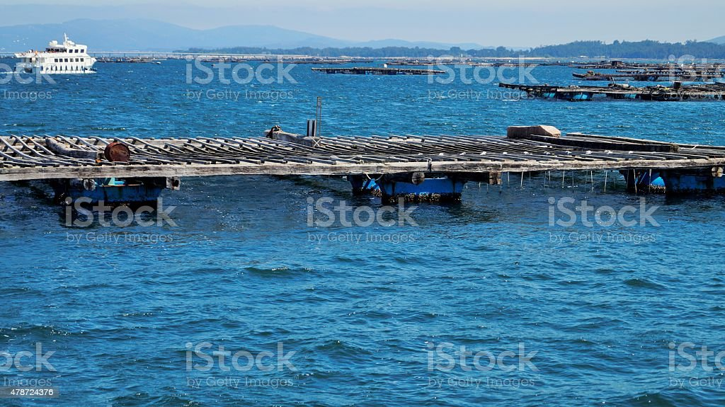 Mussel farms. stock photo