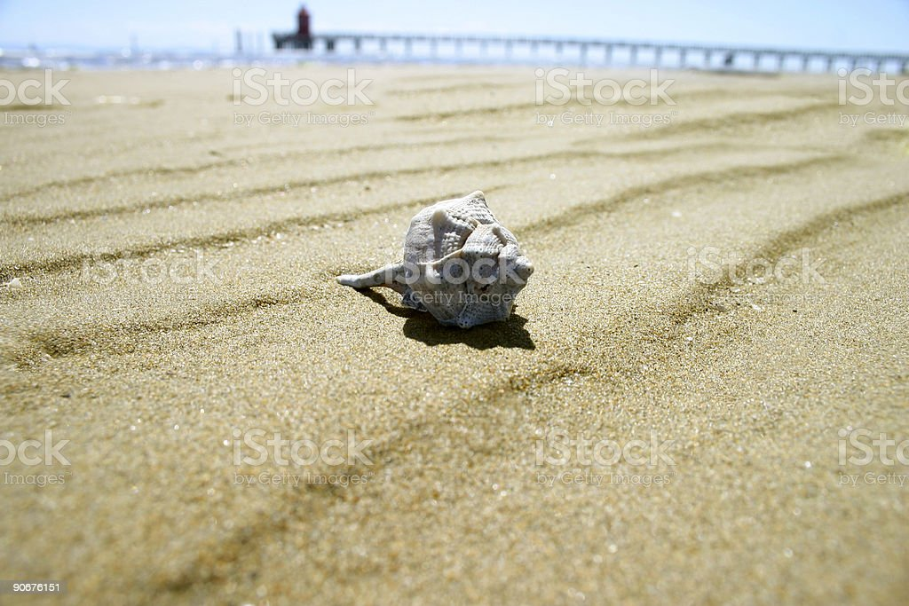 Mussel in the sand 2 royalty-free stock photo