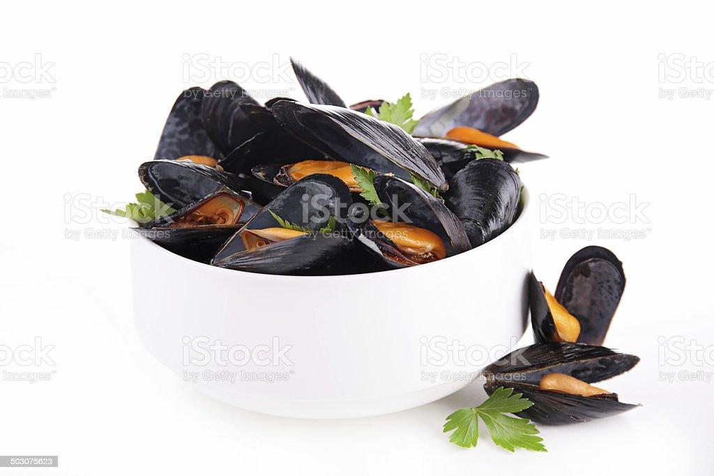 mussel stock photo