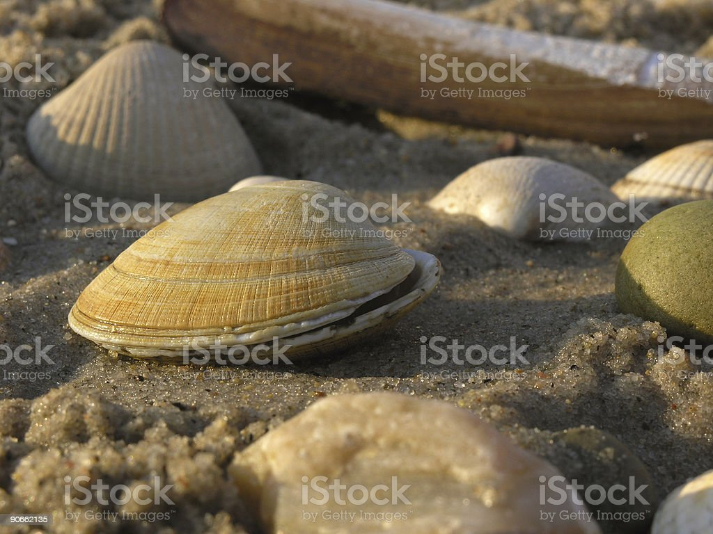 mussel royalty-free stock photo