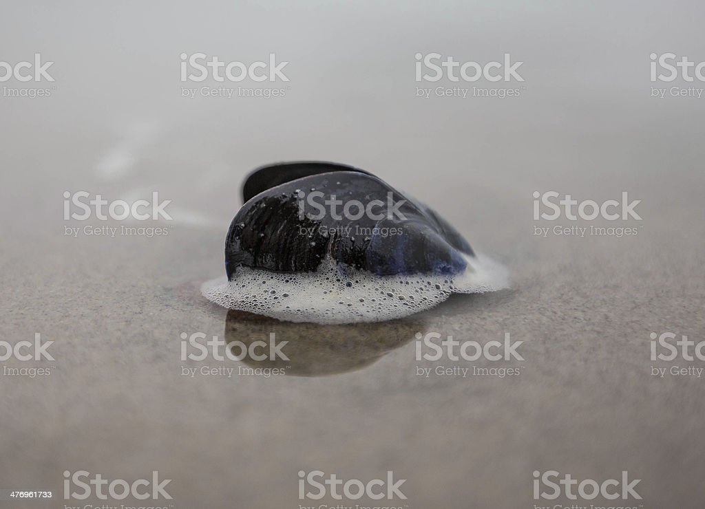 Mussel shell on beach royalty-free stock photo