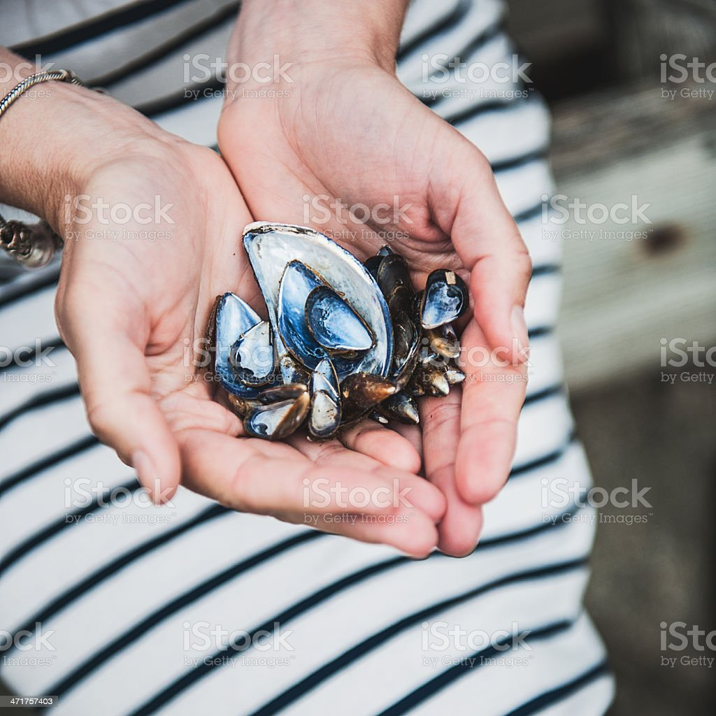 Mussel shells royalty-free stock photo