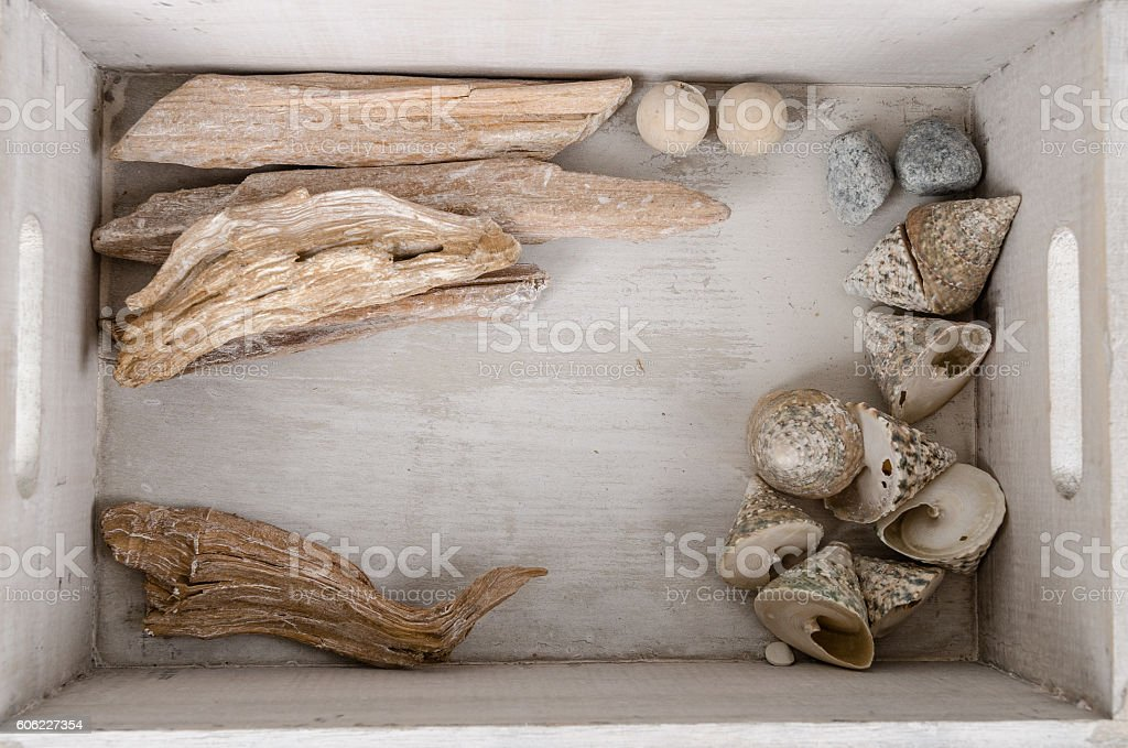 Mussels and driftwood frame in a box stock photo