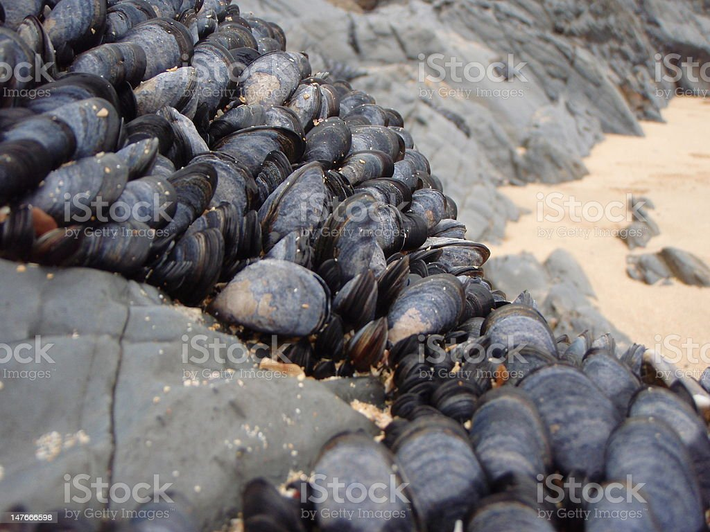 Mussels by the beach royalty-free stock photo