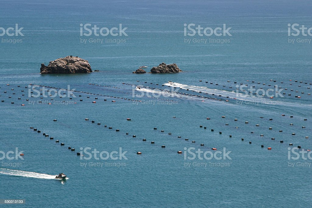 Mussels farm, New Zealand stock photo