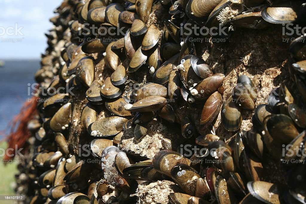 Mussels in sunlight stock photo