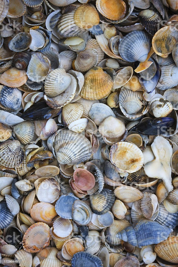 Mussels Texture stock photo