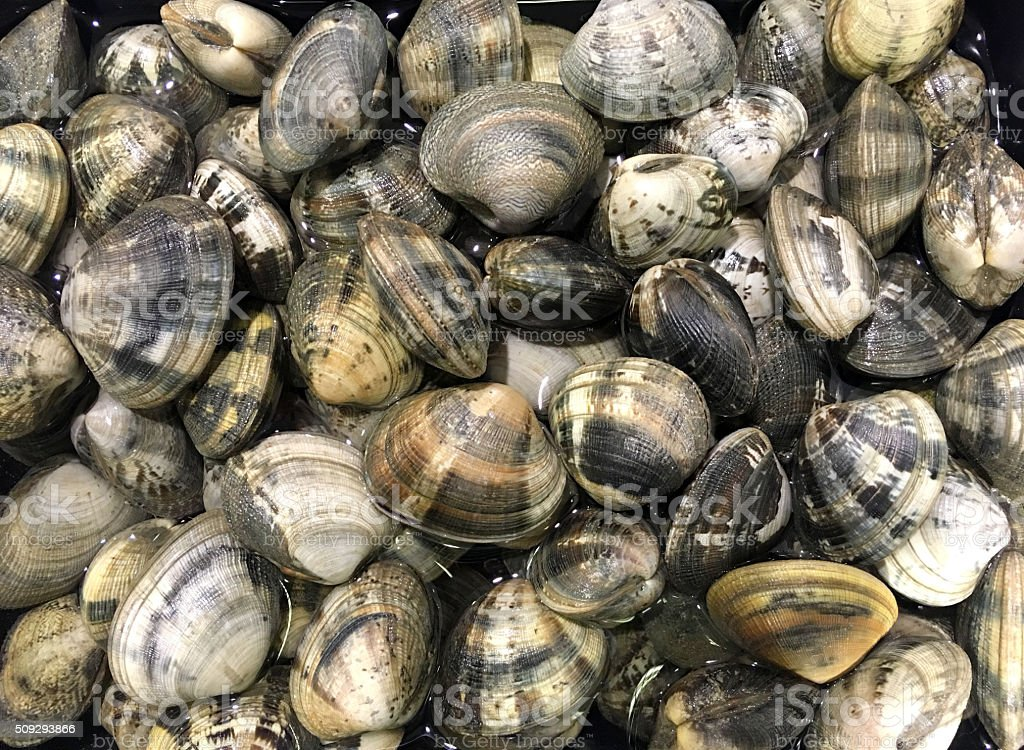 Mussels/Moules. stock photo