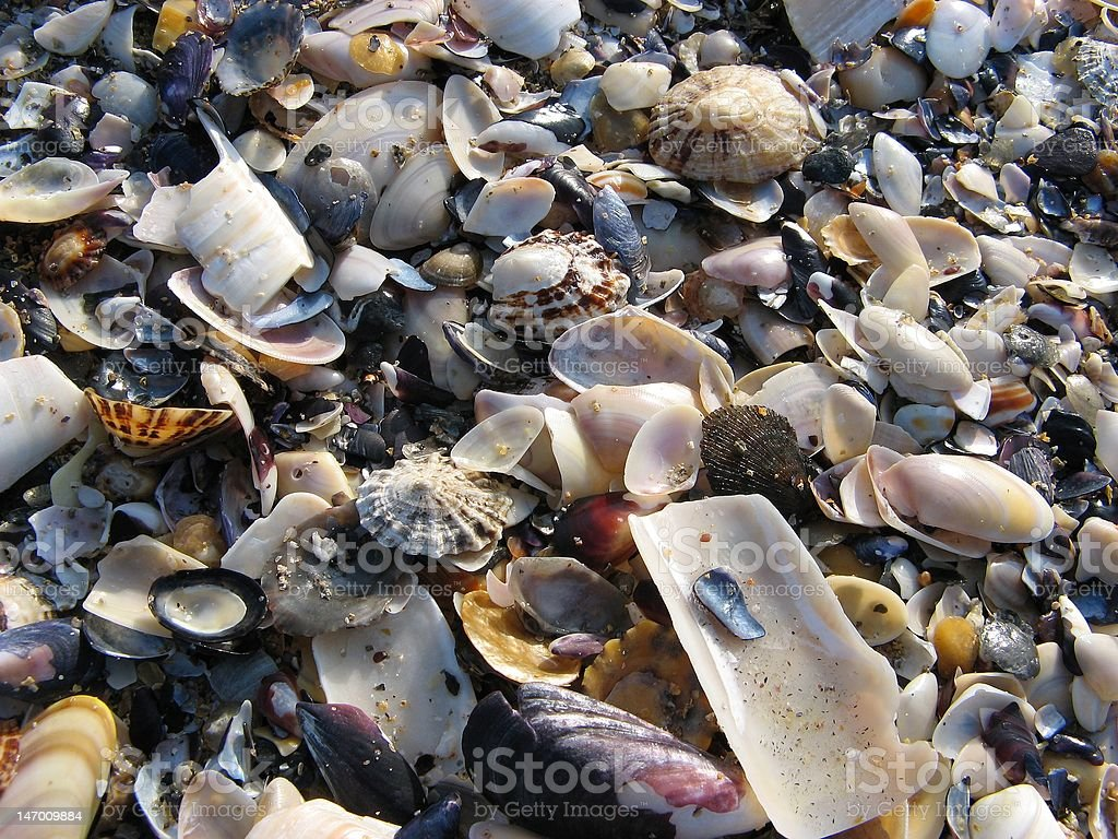 mussles royalty-free stock photo