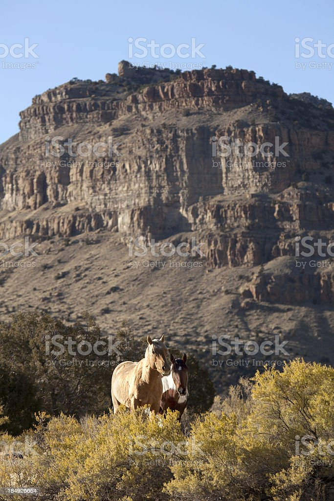 Mustang Wild Horses in western Colorado canyon country vertical stock photo