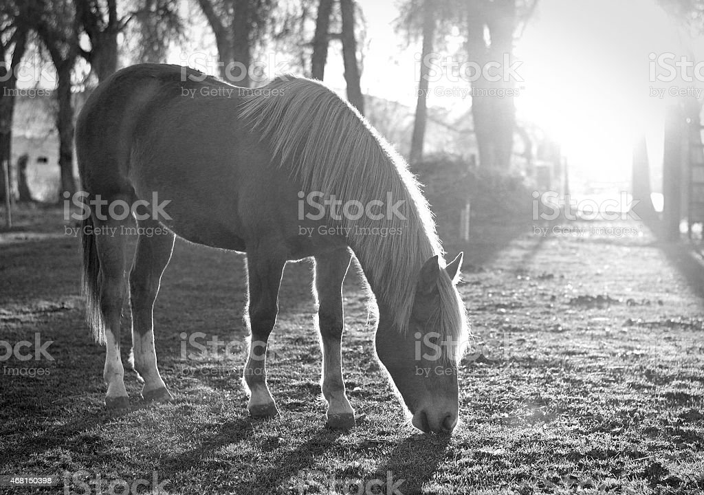 Mustang yearling stock photo