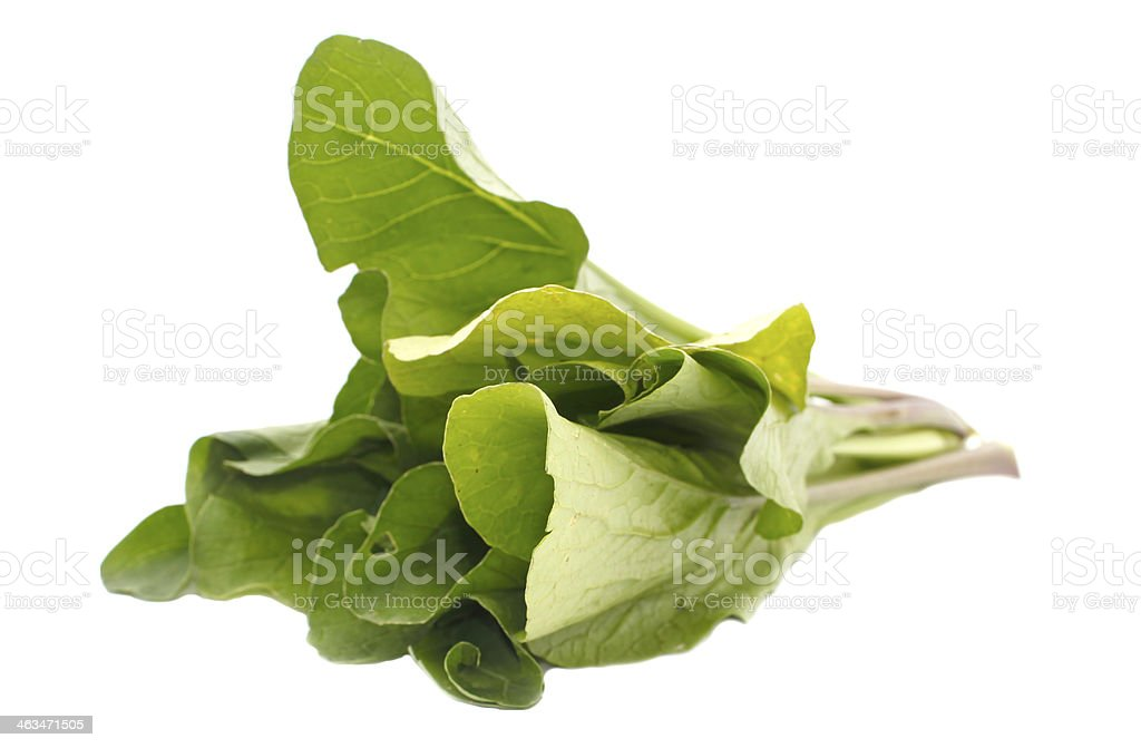 Mustard greens vegetable isolated on white stock photo