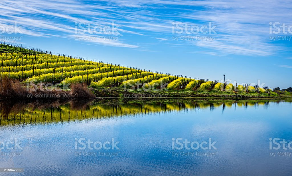 Mustard Reflections stock photo