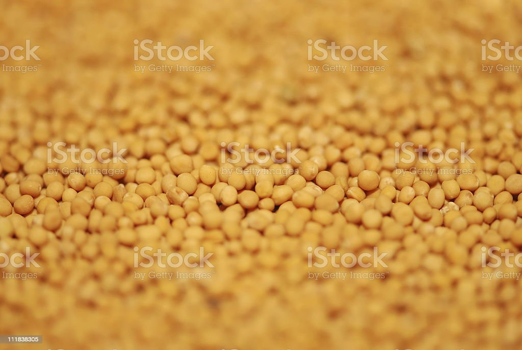 Mustard seed royalty-free stock photo