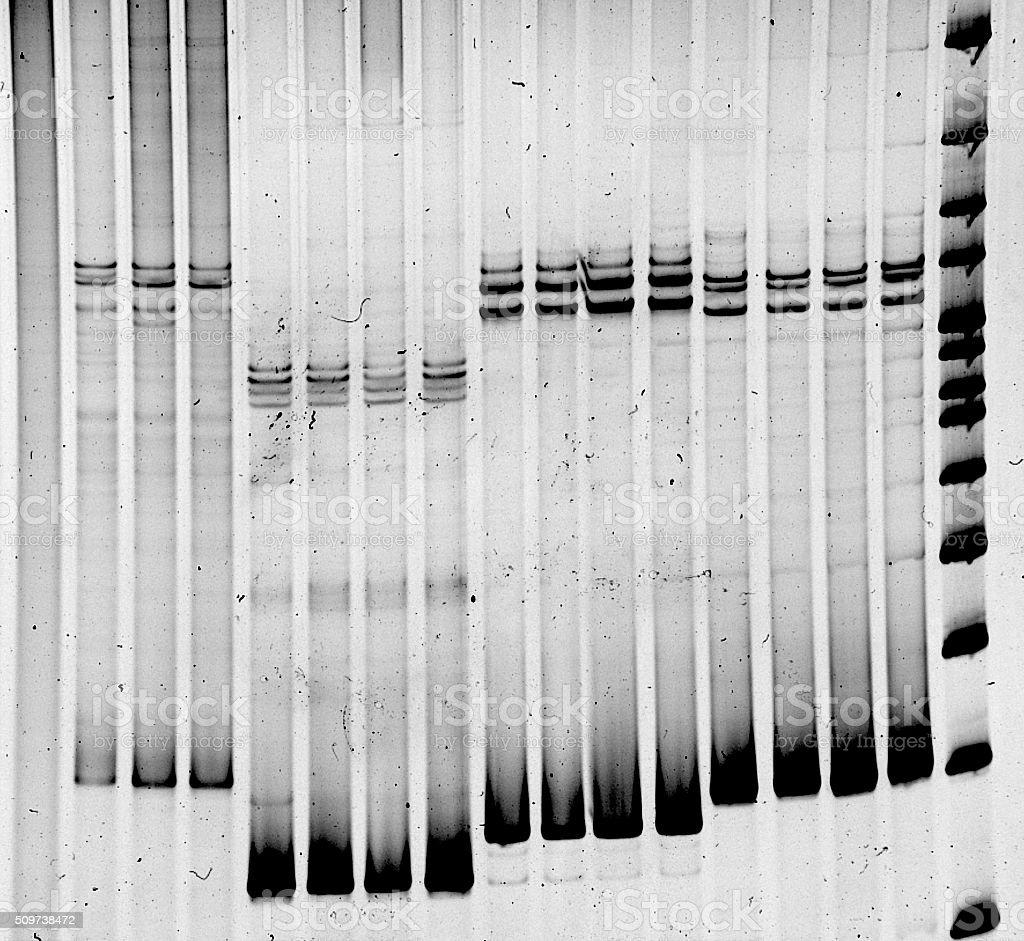 Mutation screening stock photo