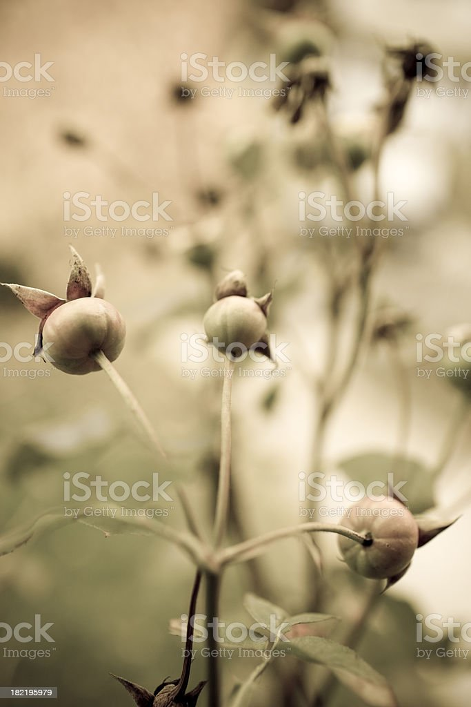 muted fall flowers royalty-free stock photo