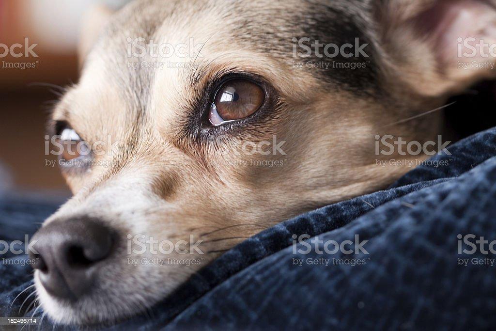 Mutt dog stock photo