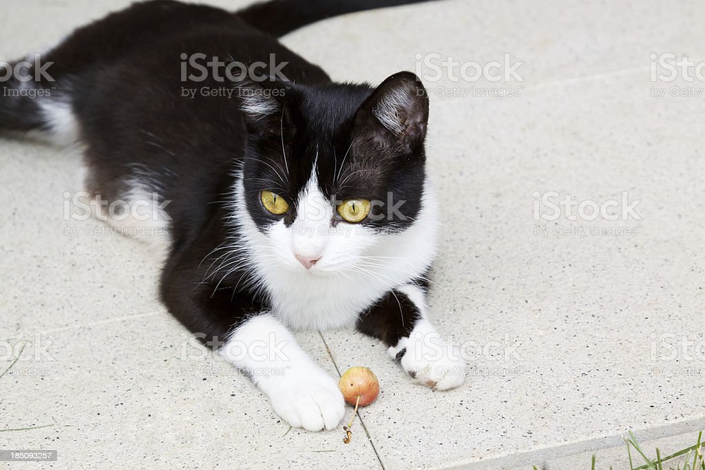 my apple stock photo