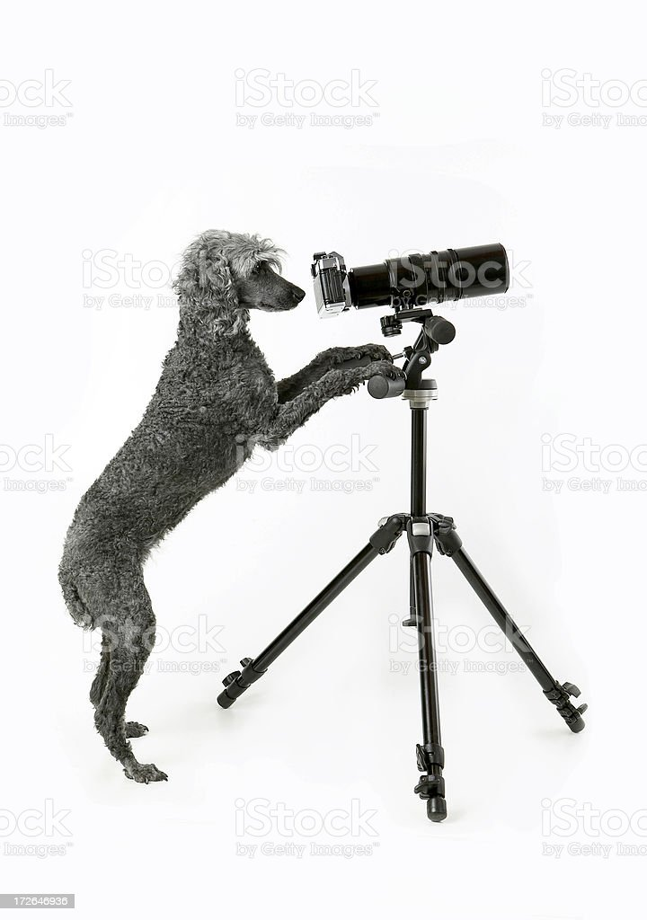 My assistant at work royalty-free stock photo