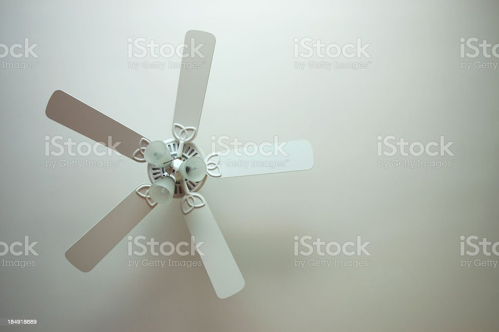 My Biggest Fan stock photo