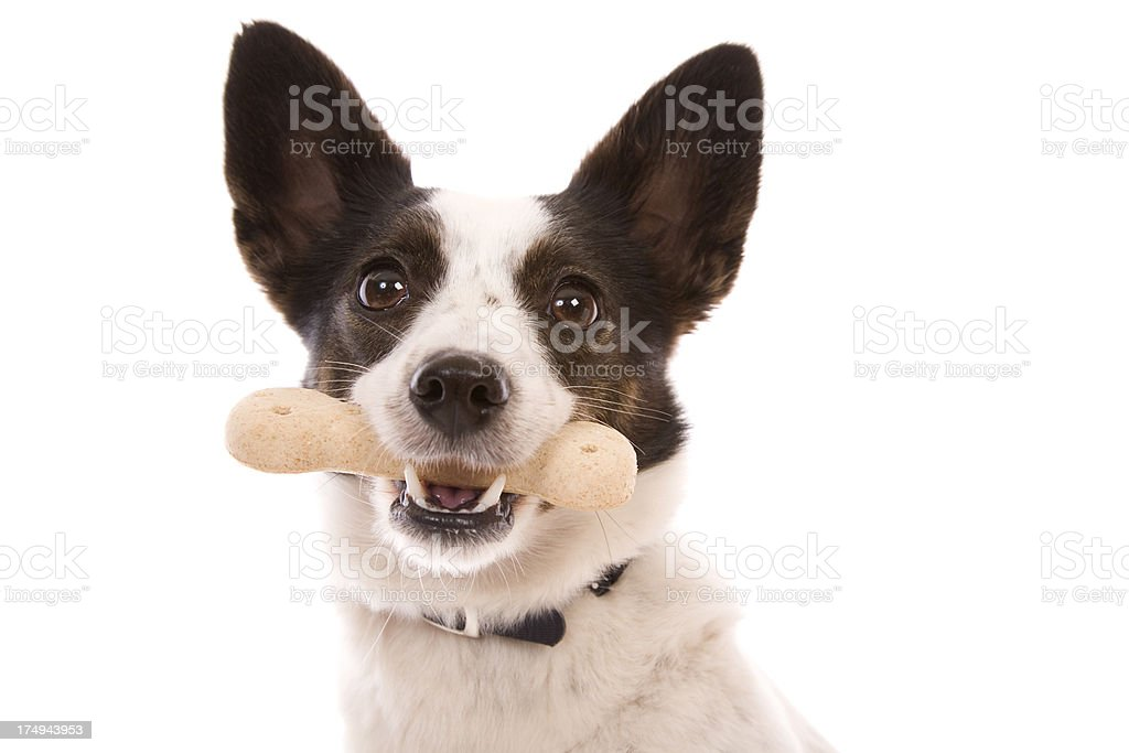 My Biscuit royalty-free stock photo