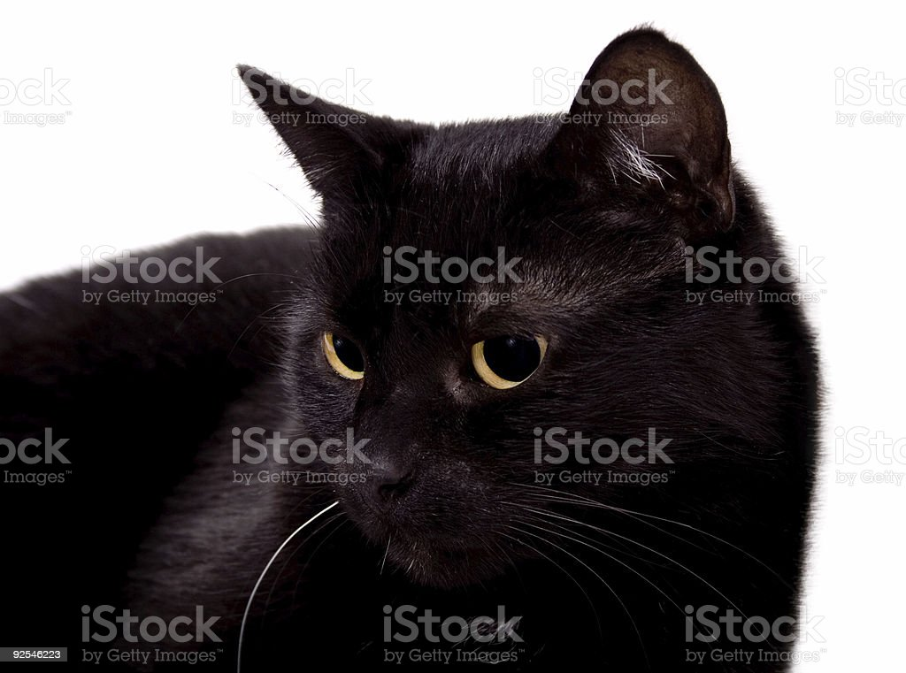 My black cat stock photo