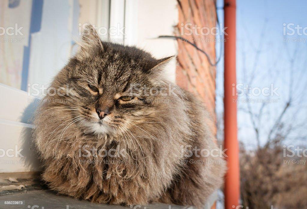 my cat stock photo