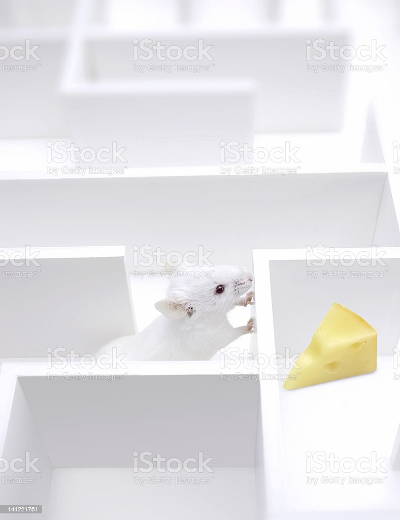 My cheese royalty-free stock photo