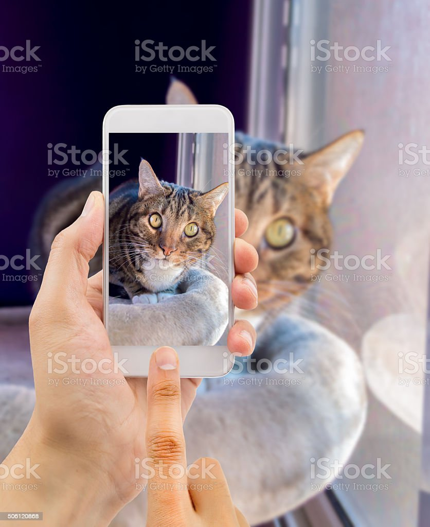 my cute cat stock photo