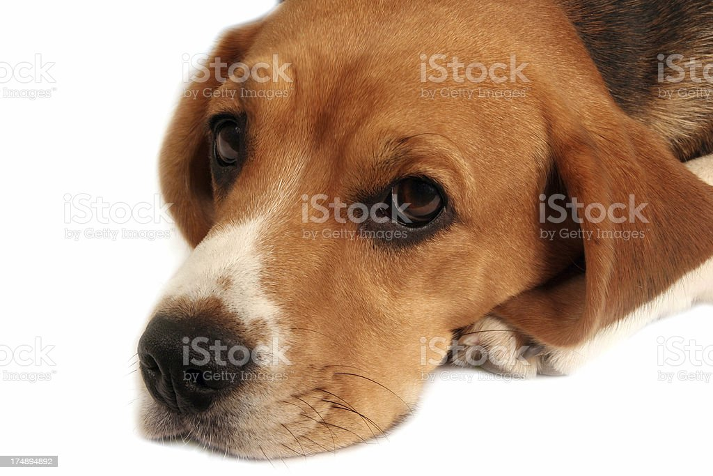 my dog royalty-free stock photo